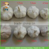 Fresh New China Garlic Size 4.5CM, 5.0CM, 5.5CM, 6.0CM
