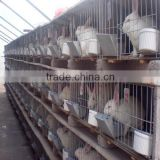 rabbit farming cage/rabbit breeding cages/commercial rabbit cages                                                                         Quality Choice