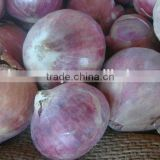 Dried Onion for Export - Fresh Crop 2016