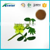 High quality pure herb extract tribulus terrestris 40%-90% Saponins tribulus terrestris extract