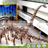 Replica Model of Outdoor Giant Life Size Dinosaur Skeleton