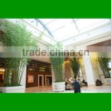 Simulation outdoorBamboo Tree / indoor home decoration bamboo tree/ artificial bamboo /fake bamboo