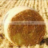 Straw hay bale, animal filler hay, wheat straw hay, wheat hay bale, straw bale, straw hay