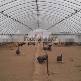Fire retardant and Large Multi-span breeding greenhouses,chicken house,chicken greenhouse
