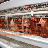 Poultry Farming A Type Battery Layer Chicken Cage Equipment  Cold or Hot Galvanized Steel Material Silver White Color