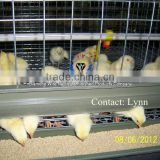 Hot-dipped Galvanized Anti-rust Poultry Farm Baby Chicken Breeding Cages