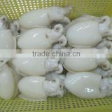 Frozen Cuttlefish whole round cleaned