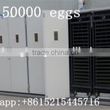 Newest holding 50000 eggs CE certificate commercial chicken hatching incubators hatching eggs for sale