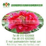 high quality natural plant extract antioxidant Brown Powder 10:1 15:1 20:1 30:1(%) Tree Peony Bark Extract