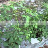 Coco Coir Pith Grow Bags for 2016 Sale