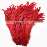 Wholesale Cheap Dyed Red chicken feather Rooster Tail Feathers