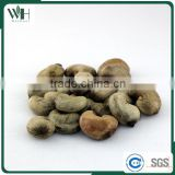 Cambodia Origin Raw Cashew Nuts in Shells