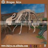 2016 life size dinosaur skeleton dinosaur fossil for outdoor playground