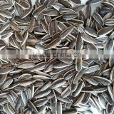 2016 new crop sunflower seeds long shape big size 24/64 hot sale