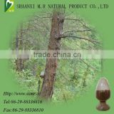 Natural Pine bark extract 95% Proanthocyanidins OPC, pine bark p.e powder, pine bark powder