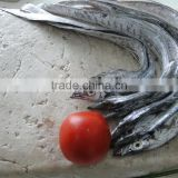 Ribbon fish surimi