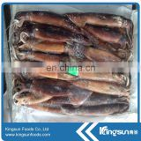 Frozen Illex Squid 100-150g