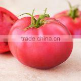 2016 Newest Crop High Yield Hybrid F1 High Disease Resistance Indeterminate Pink Tomato Seeds From China For Planting