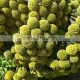 New arrival high quality names of flowers used for decoration Hobby lobby wholesale flowers for birthdays