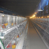 A-Type Chicken Cage