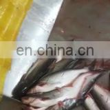 Fish Meal Processing Plant Fish Meat Bone Separator Fish Scaler Machine