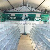 battery quail rearing cage for poultry layer quail farm                                                                         Quality Choice