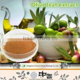 2015 new products Olive Leaf Extract Powder Oleuropein