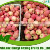 2015 bulk Fresh apple chinese apple fruit green gala apple