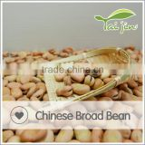Chinese Broad Bean