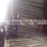 High Quality Vietnam Bamboo Pole with cheap Price
