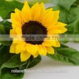 With Long Time Flowers Fresh Sunflower Price Bulk From Kunming