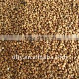 Rosted Buckwheat Kernel