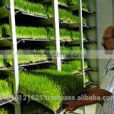 StarMax Cattle Green Fodder Growing Machine/ Grass Growing Machine / Barley Grass Growing Machine
