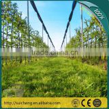Guangzhou Fruit Tree Protection Net/ Plastic Anti-hail Net/ Agriculture Netting