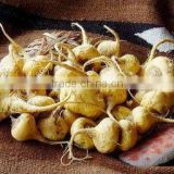 Qingdao BNP Sells Best 100% Natural Maca Root Extract--maca extract macamides and macaenes