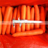 bulk packing fresh carrot