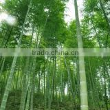Organic bamboo extract/food additives,Bamboo extract 75% silica                                                                         Quality Choice