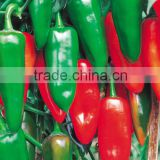 Hybrid green red chilli pepper seeds for sale-Kezheng No.19