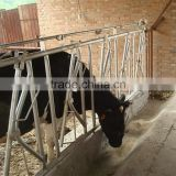 Cattle Beef Cow Project-Cow Head Locks Price for Sales