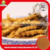 GMP Manufacture Directly Sell Plant Extract Cordyceps Mycelia Yellow Brown Powder with Free Sample 10-20g