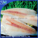 Frozen hake fish fillet for sale