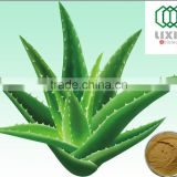 Hot Selling Natural Herbal Aloe Vera Extract Powder, Aloe Vera gel,Aloe Vera Extract with 10%-98% Aloin,Aloe Vera Extract Capsul