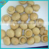 Canned whole button mushroom from factory directly
