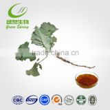 burdock root extract powder