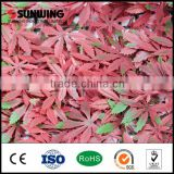 Hot sell decorative artificial boxwood hedge wreath mat                                                                                                         Supplier's Choice