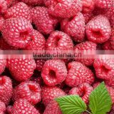 trade assurance Super Pure natual healthy weight loss product Raspberry extract powder Raspberry ketone