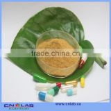 GMP supplier ginkgo biloba extract capsule