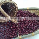 Organic Chinese Adzuki Bean/Small Red Bean( 2011 crop) Hps