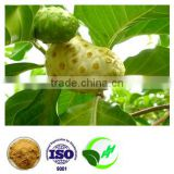 100% Natural Noni Extract Powder