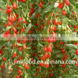 high quality Qinghai dried goji berry for sale